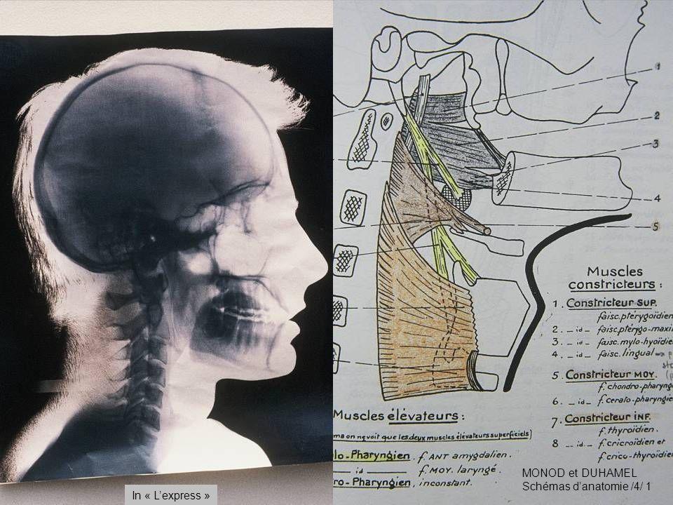 MONOD et DUHAMEL Schémas d'anatomie /4/ 1 In « L'express »