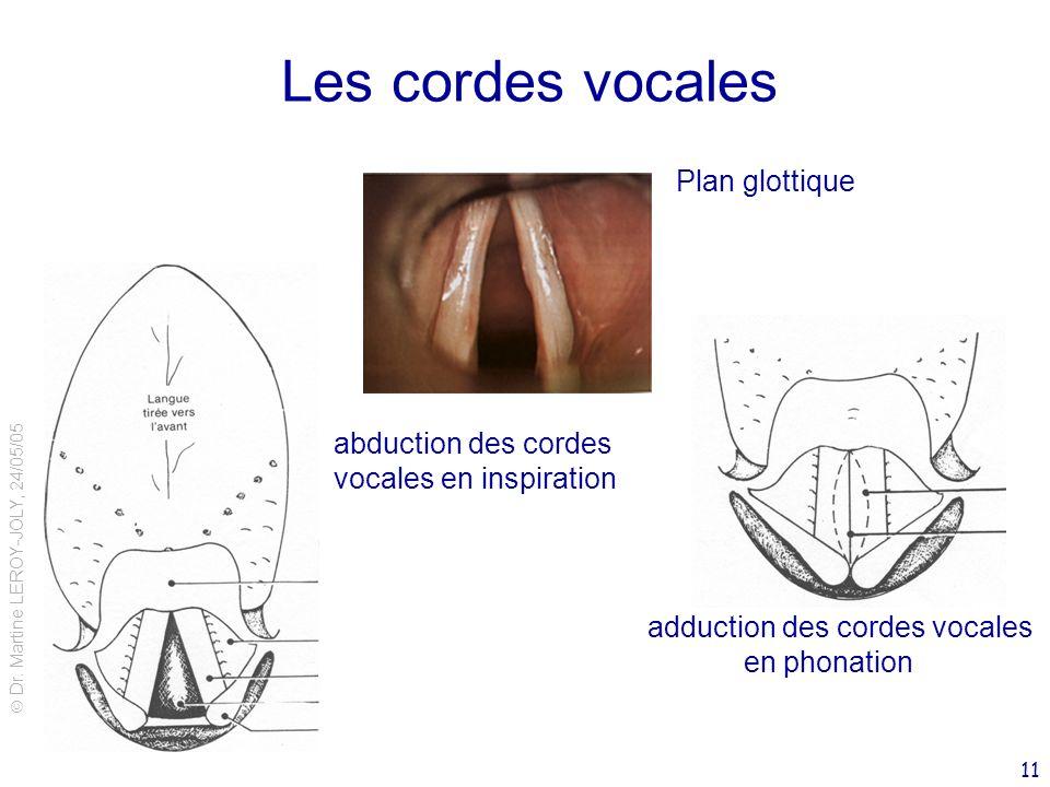 Les cordes vocales Plan glottique