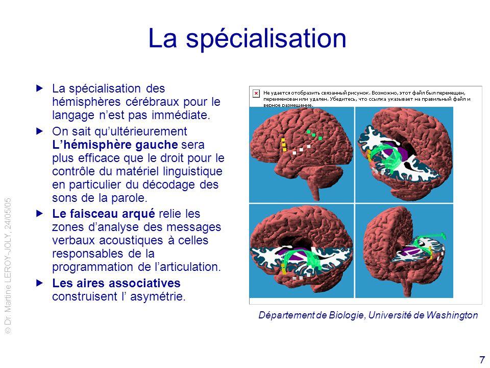 La spécialisation La spécialisation des hémisphères cérébraux pour le langage n'est pas immédiate.