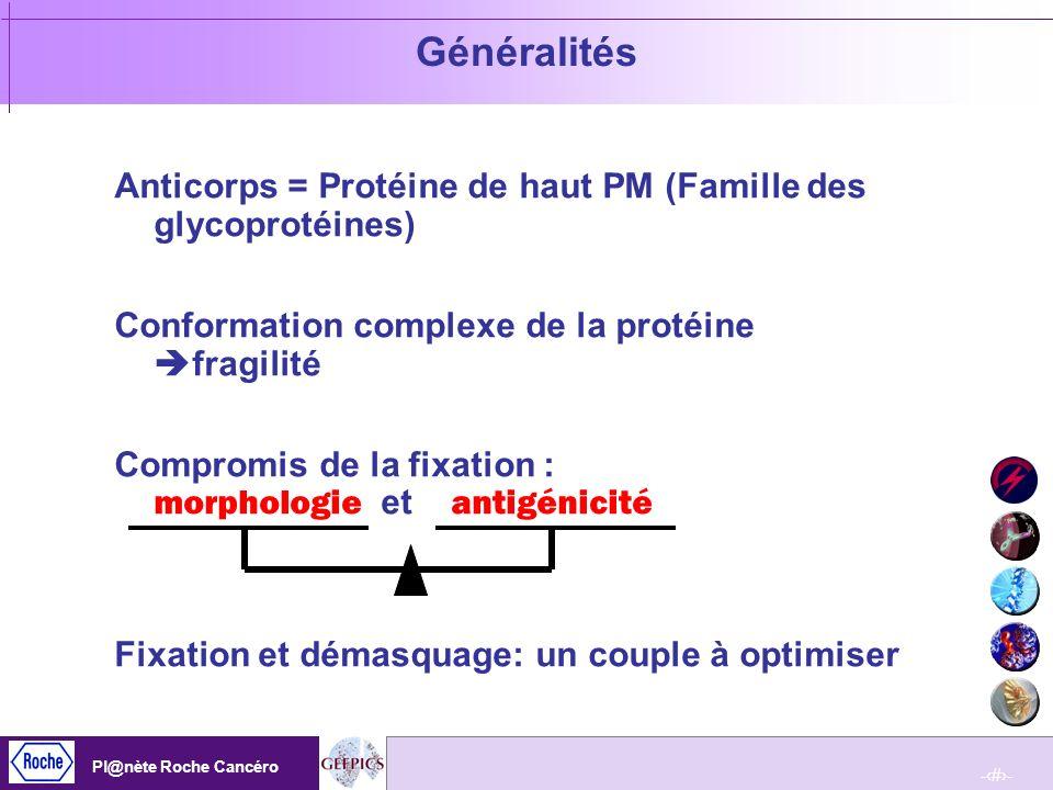 GénéralitésAnticorps = Protéine de haut PM (Famille des glycoprotéines) Conformation complexe de la protéine fragilité.
