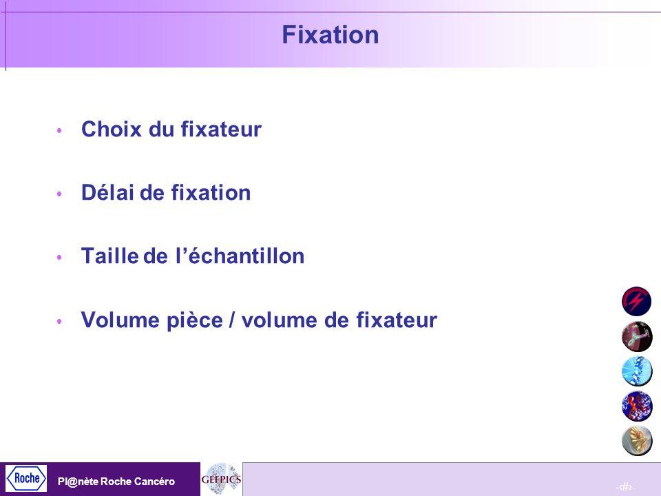 Fixation Choix du fixateur Délai de fixation Taille de l'échantillon