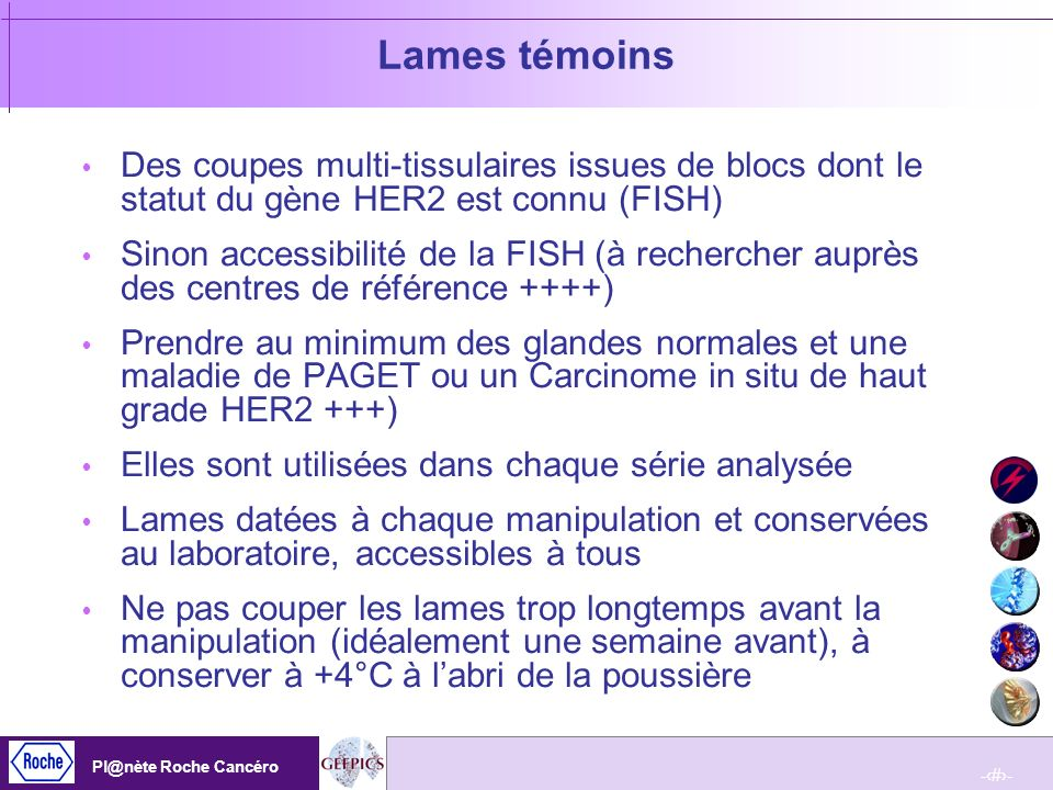 Lames témoins Des coupes multi-tissulaires issues de blocs dont le statut du gène HER2 est connu (FISH)