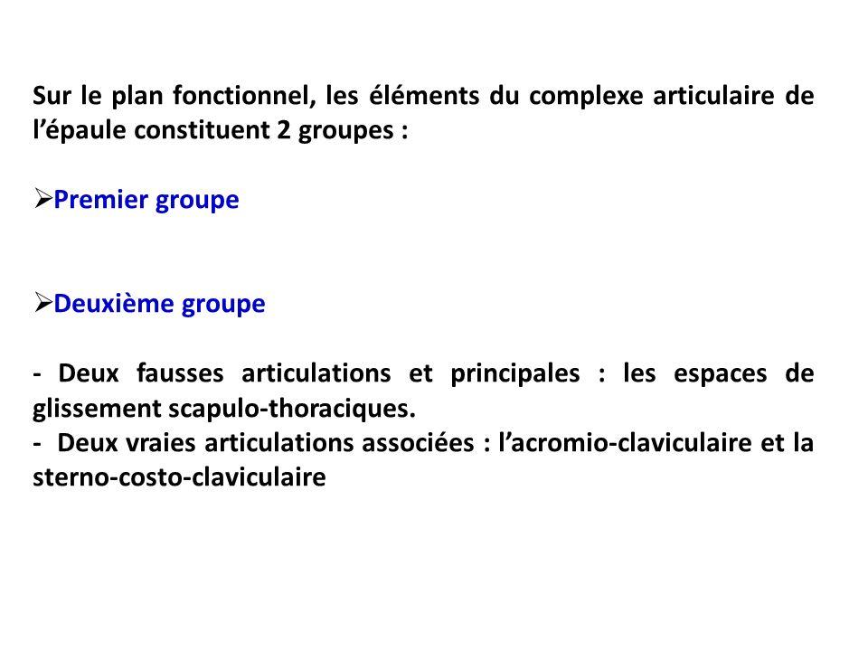 Sur le plan fonctionnel, les éléments du complexe articulaire de l'épaule constituent 2 groupes :