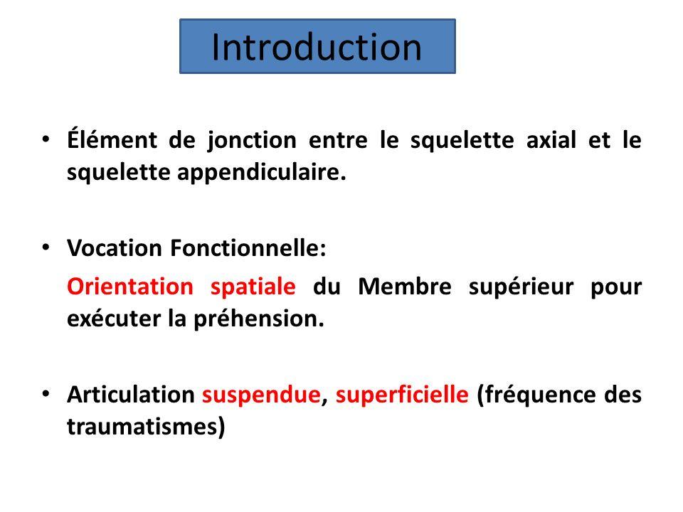 Introduction Élément de jonction entre le squelette axial et le squelette appendiculaire. Vocation Fonctionnelle: