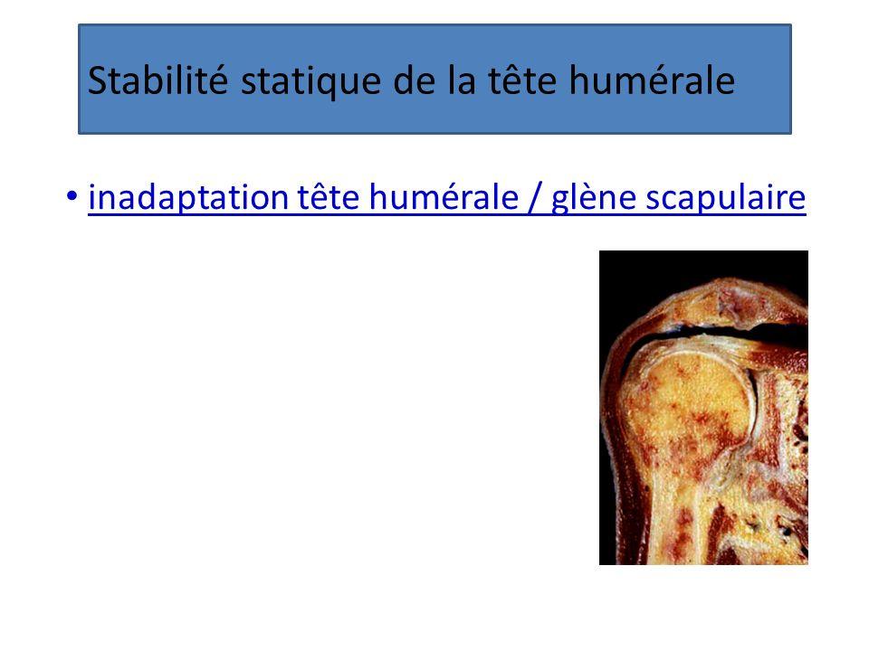 Stabilité statique de la tête humérale