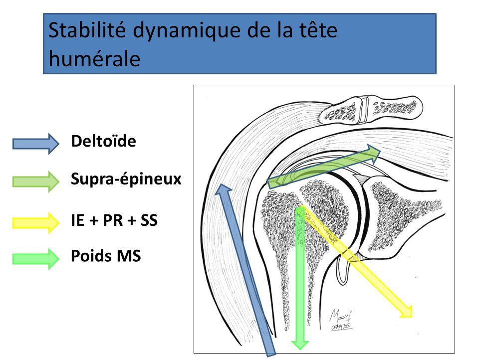 Stabilité dynamique de la tête humérale