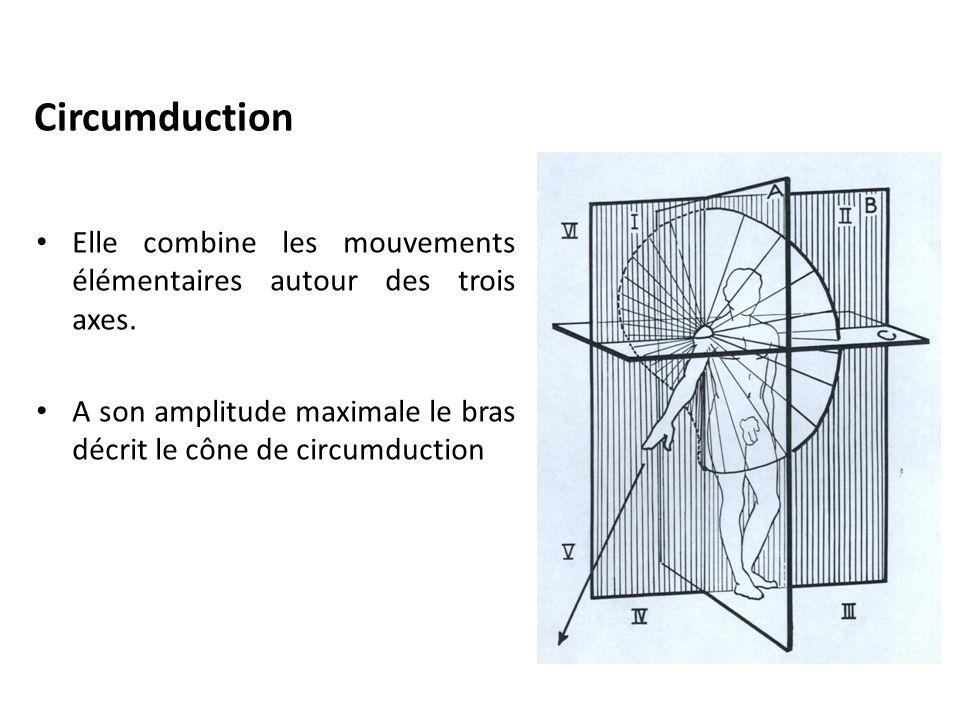 Circumduction Elle combine les mouvements élémentaires autour des trois axes.