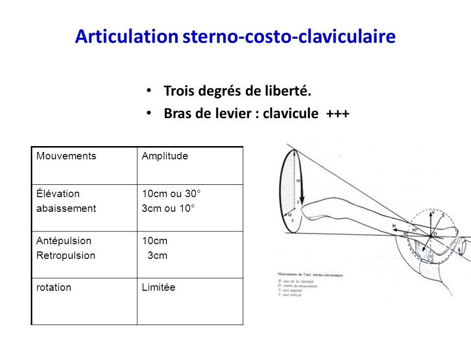 Articulation sterno-costo-claviculaire