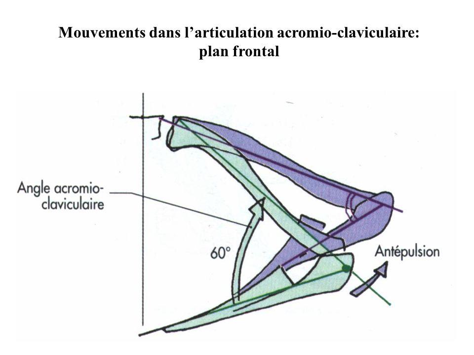 Mouvements dans l'articulation acromio-claviculaire: plan frontal
