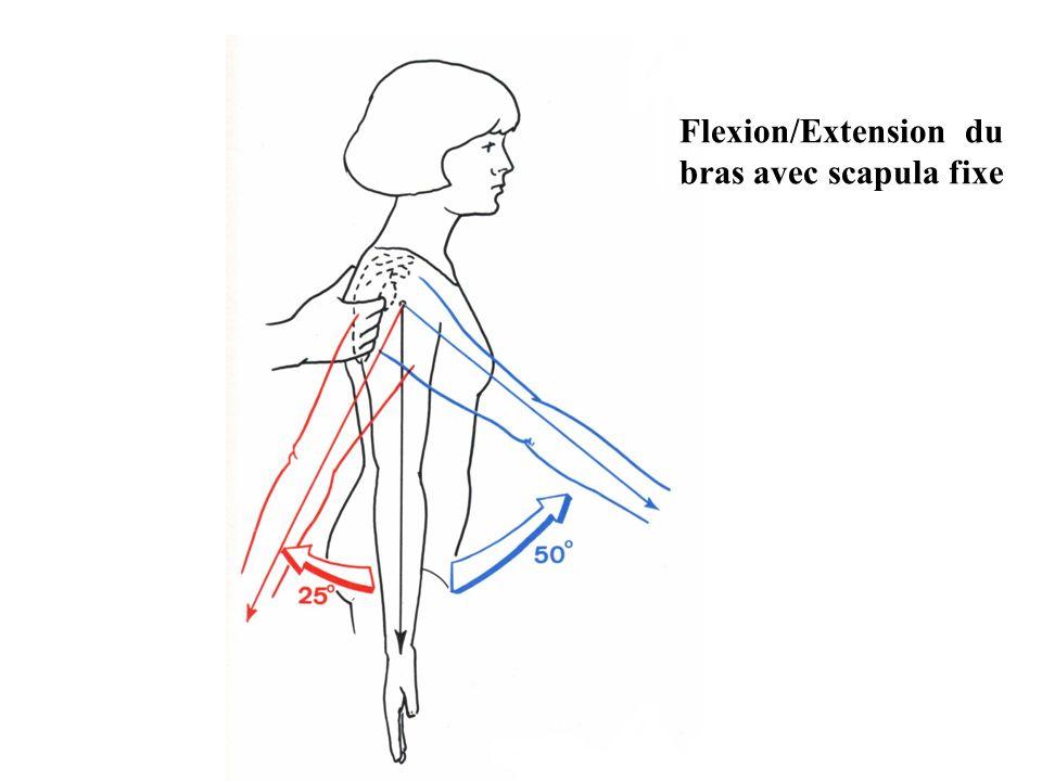 Flexion/Extension du bras avec scapula fixe