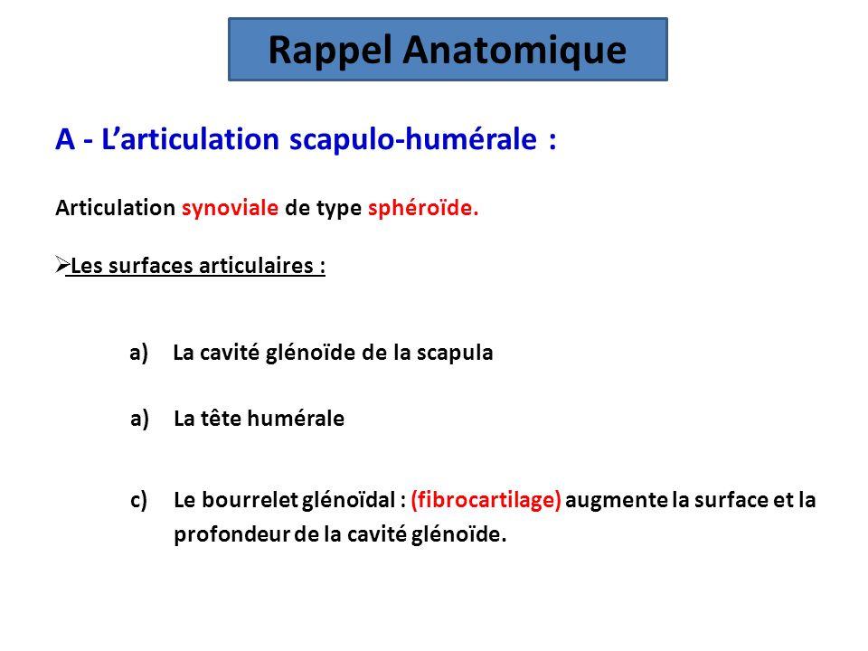 Rappel Anatomique A - L'articulation scapulo-humérale :