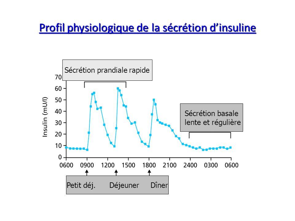 Profil physiologique de la sécrétion d'insuline