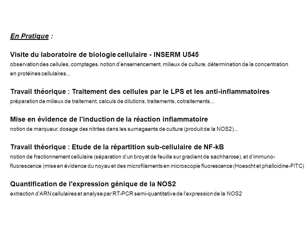 Visite du laboratoire de biologie cellulaire - INSERM U545