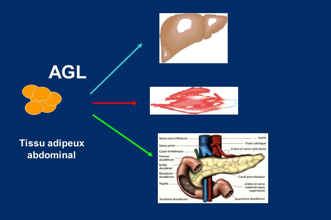 AGL Tissu adipeux abdominal