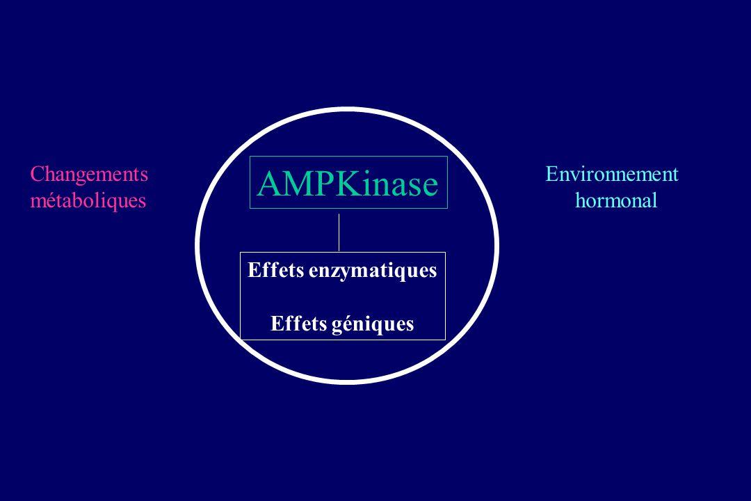 AMPKinase Changements métaboliques Environnement hormonal