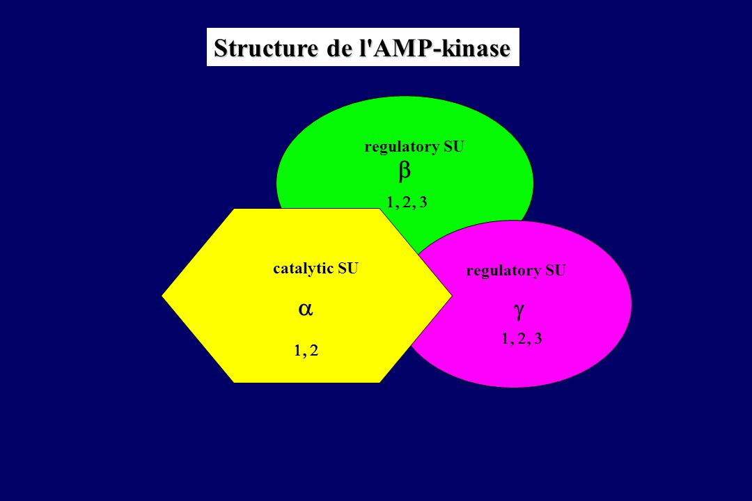 Structure de l AMP-kinase
