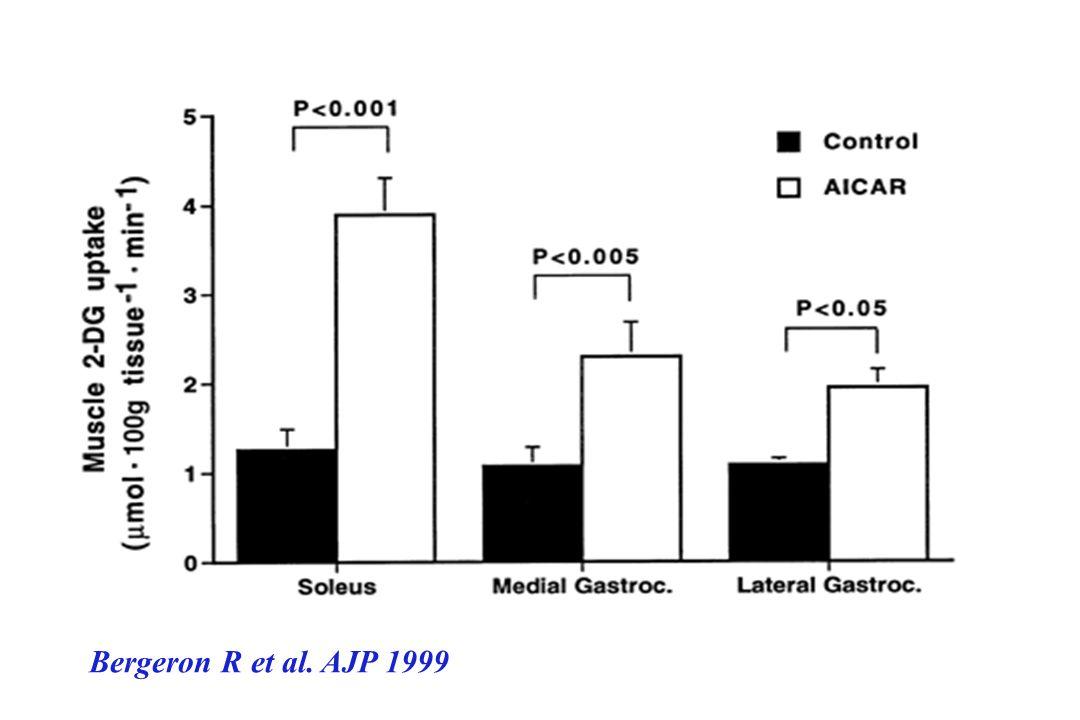 Bergeron R et al. AJP 1999