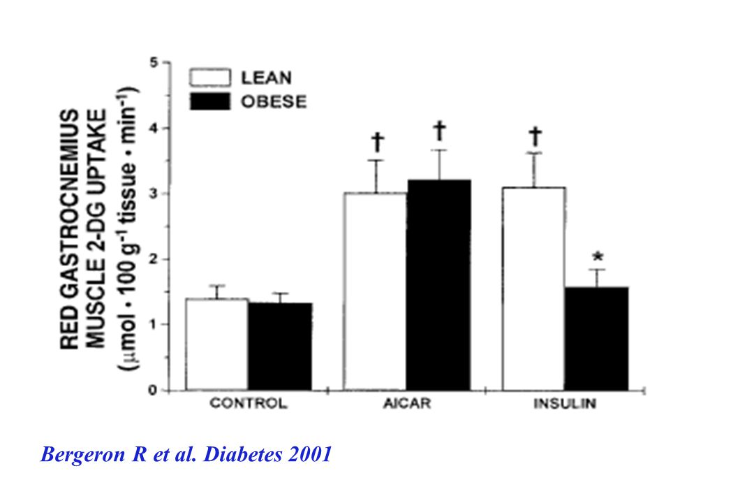Bergeron R et al. Diabetes 2001
