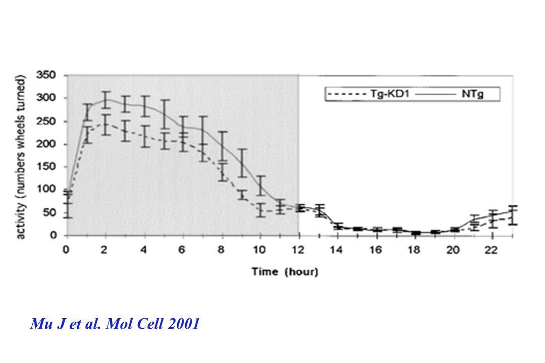 Mu J et al. Mol Cell 2001