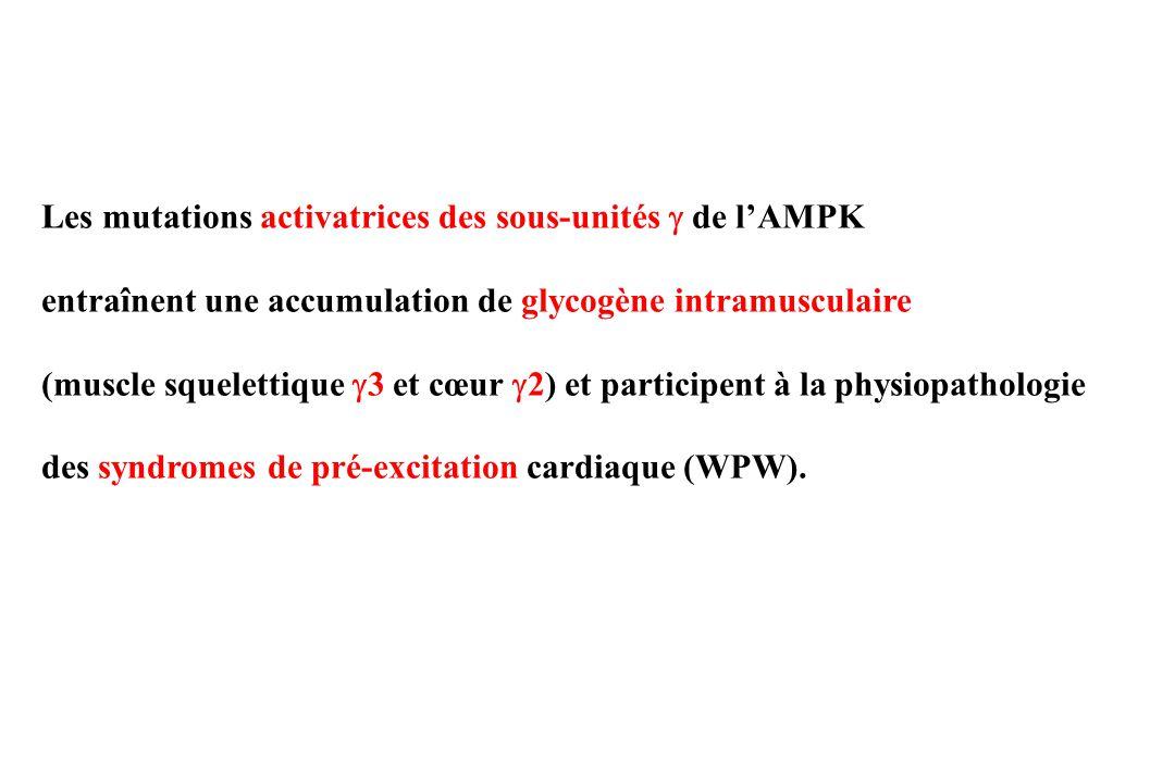 Les mutations activatrices des sous-unités  de l'AMPK