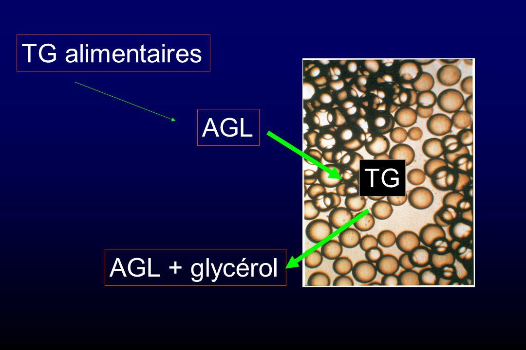 TG alimentaires AGL TG AGL + glycérol