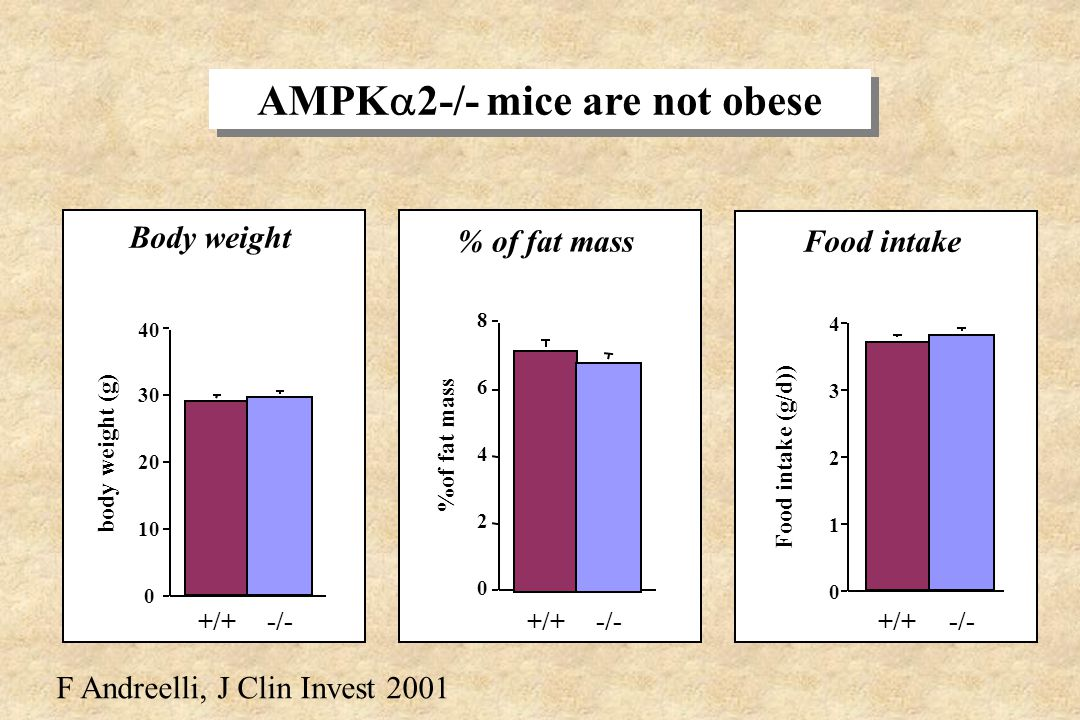 AMPK2-/- mice are not obese