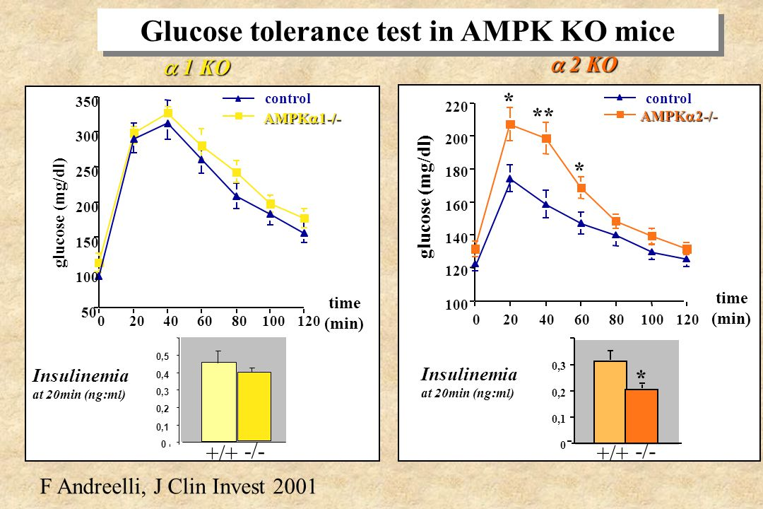 Glucose tolerance test in AMPK KO mice