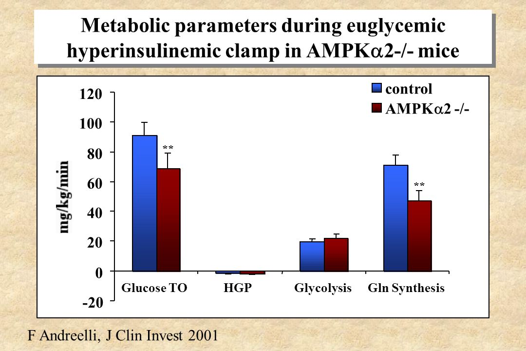 Metabolic parameters during euglycemic hyperinsulinemic clamp in AMPK2-/- mice
