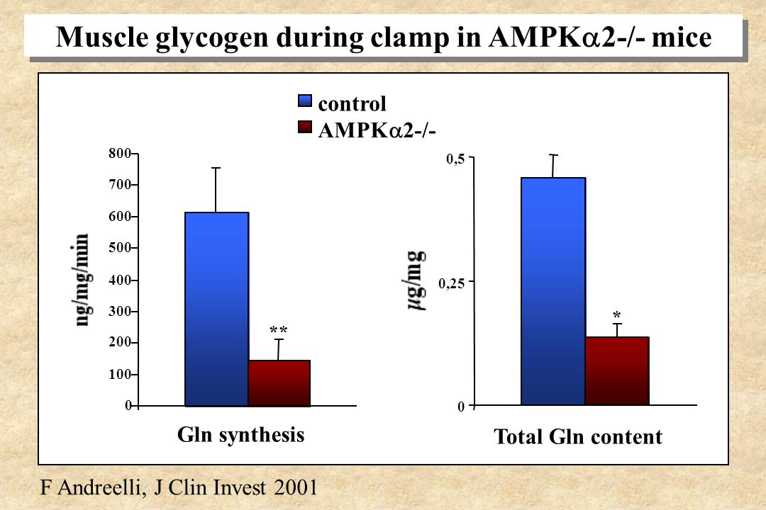 Muscle glycogen during clamp in AMPK2-/- mice