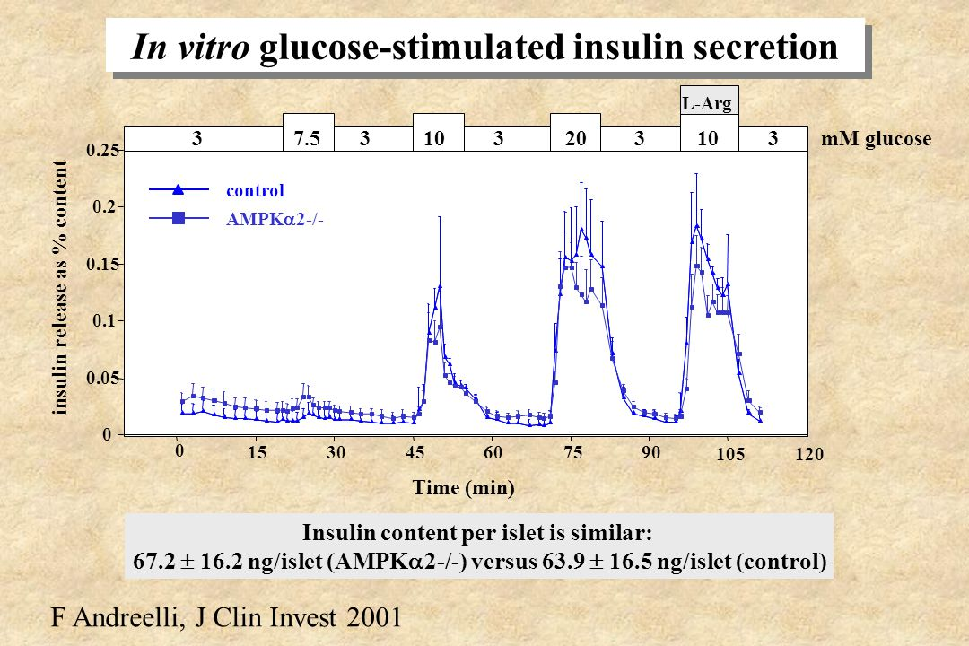 In vitro glucose-stimulated insulin secretion