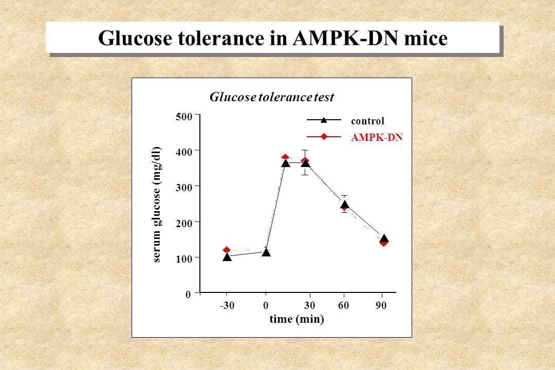 Glucose tolerance in AMPK-DN mice Glucose tolerance test