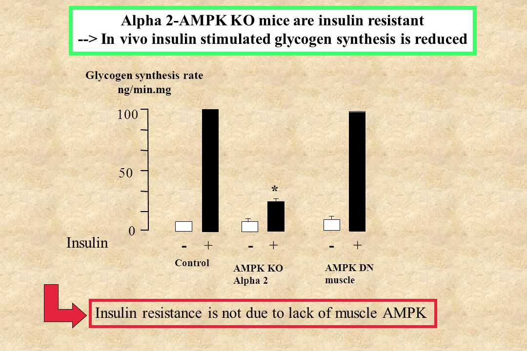 Alpha 2-AMPK KO mice are insulin resistant