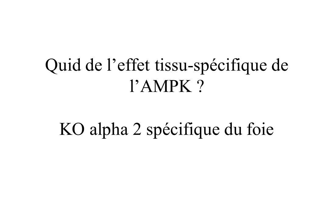 Quid de l'effet tissu-spécifique de l'AMPK