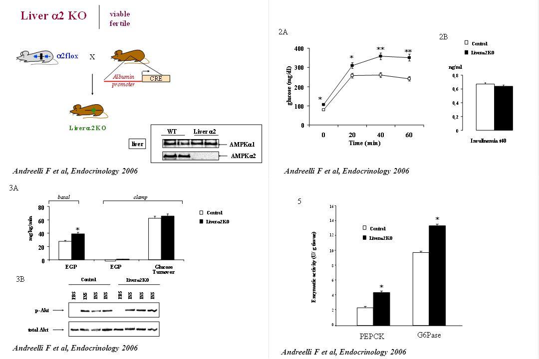 Andreelli F et al, Endocrinology 2006