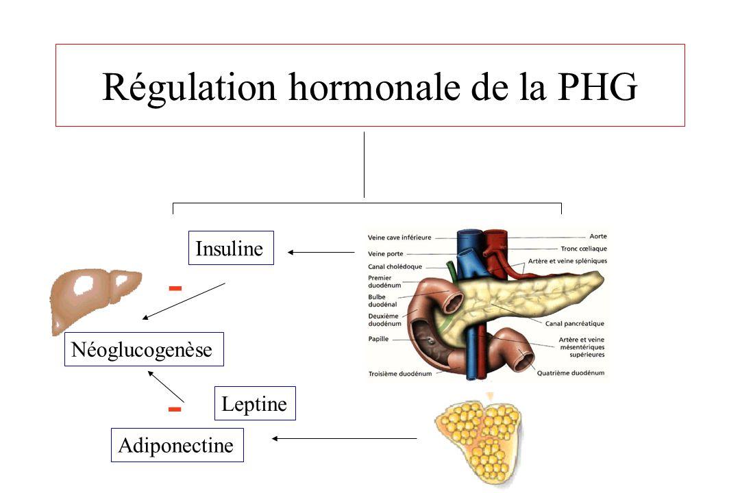 Régulation hormonale de la PHG