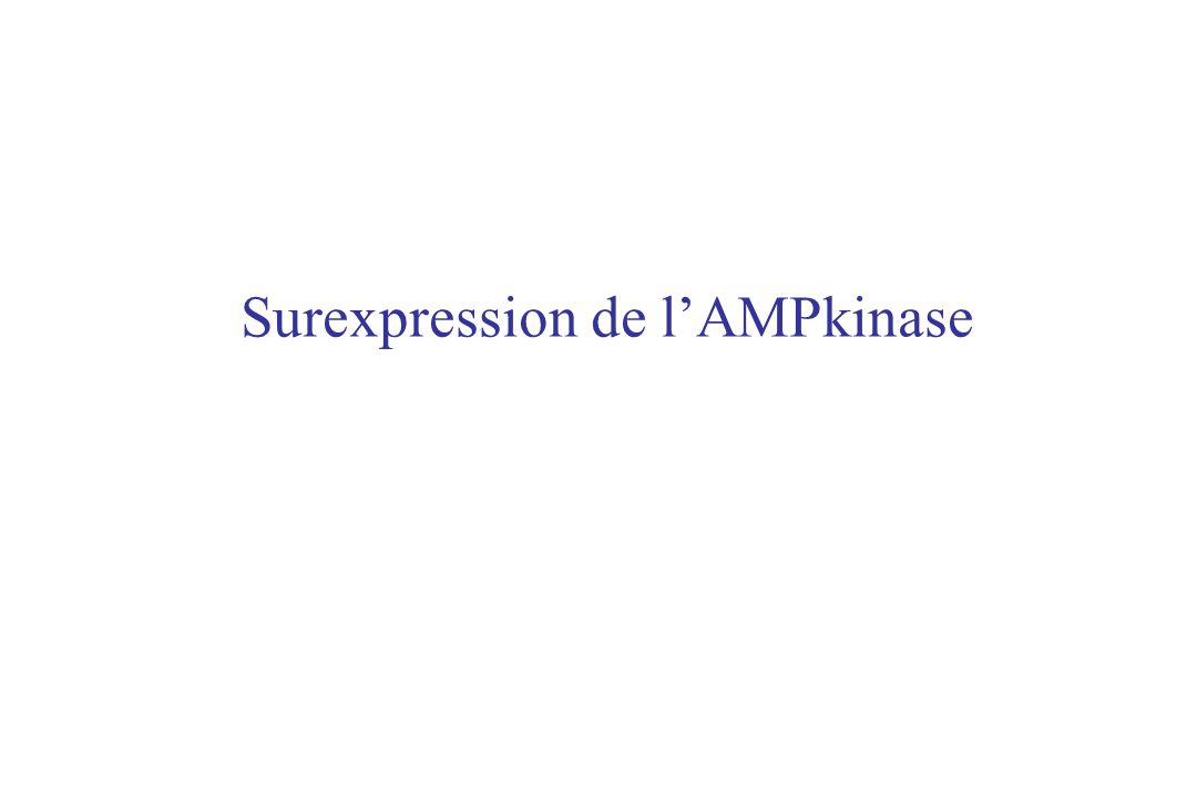 Surexpression de l'AMPkinase