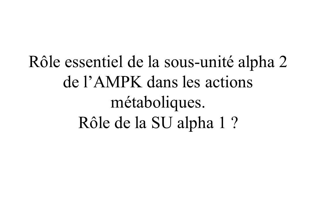 Rôle essentiel de la sous-unité alpha 2 de l'AMPK dans les actions métaboliques.
