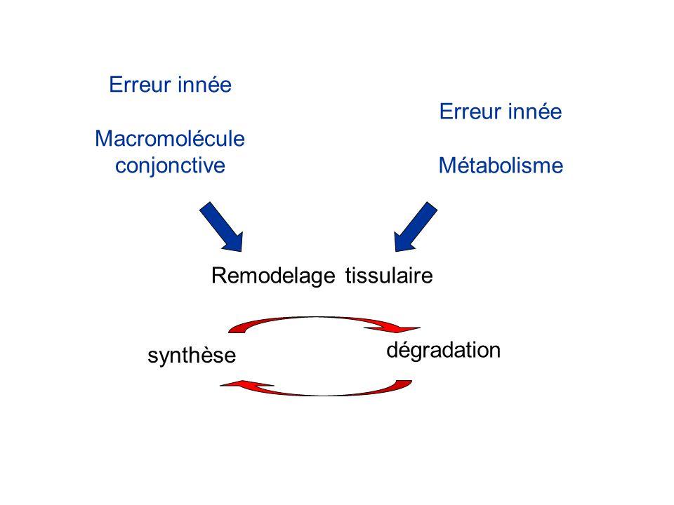 Erreur innée Macromolécule. conjonctive. Erreur innée. Métabolisme. Remodelage tissulaire. dégradation.