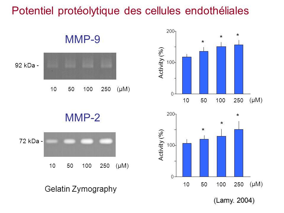 Potentiel protéolytique des cellules endothéliales