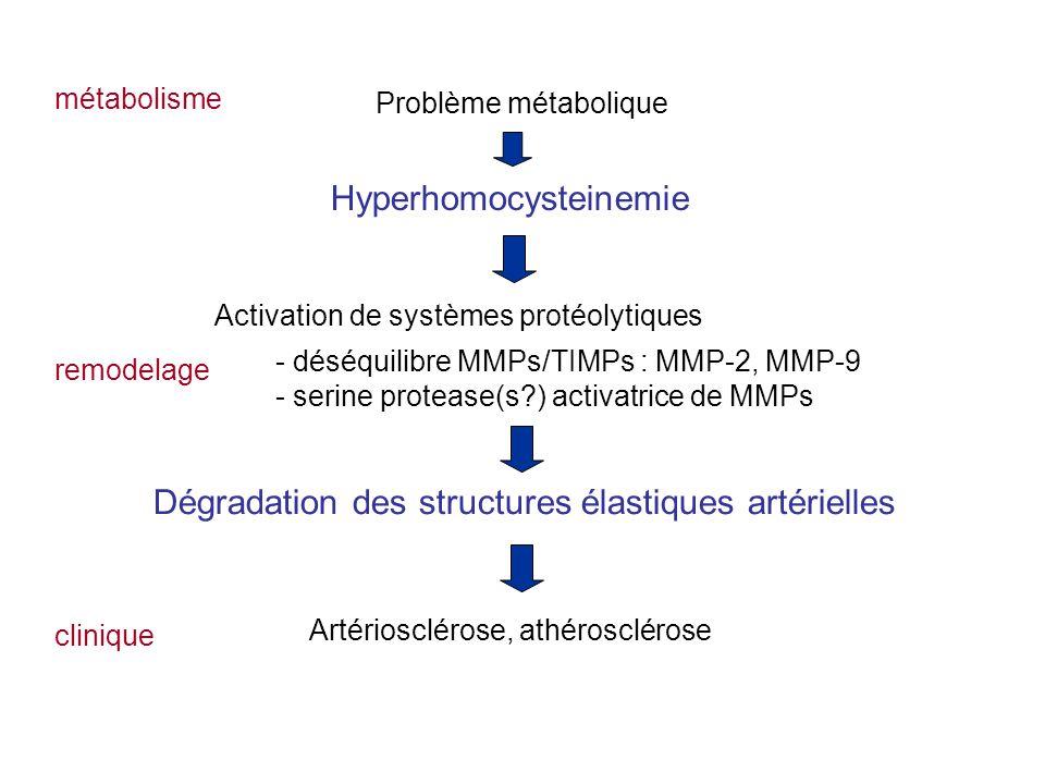 Dégradation des structures élastiques artérielles