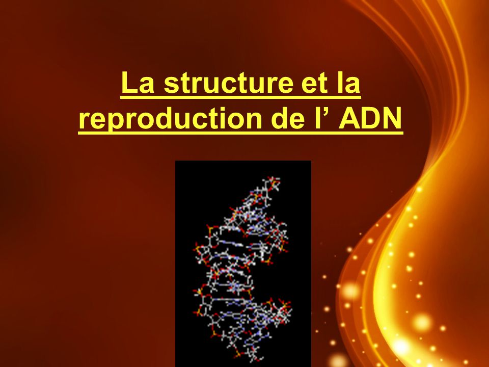 La structure et la reproduction de l' ADN