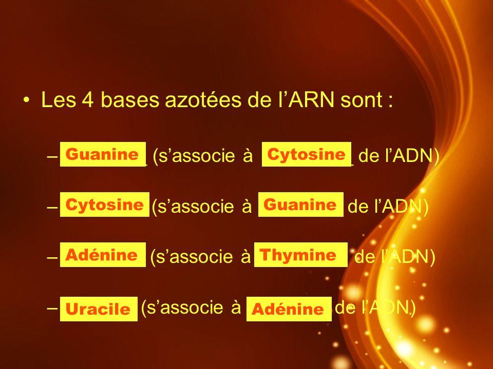Les 4 bases azotées de l'ARN sont :