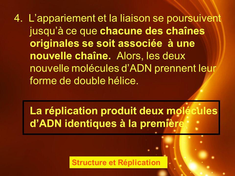La réplication produit deux molécules d'ADN identiques à la première.