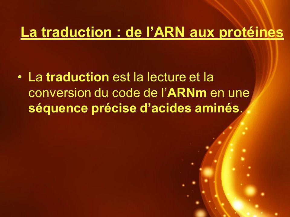 La traduction : de l'ARN aux protéines