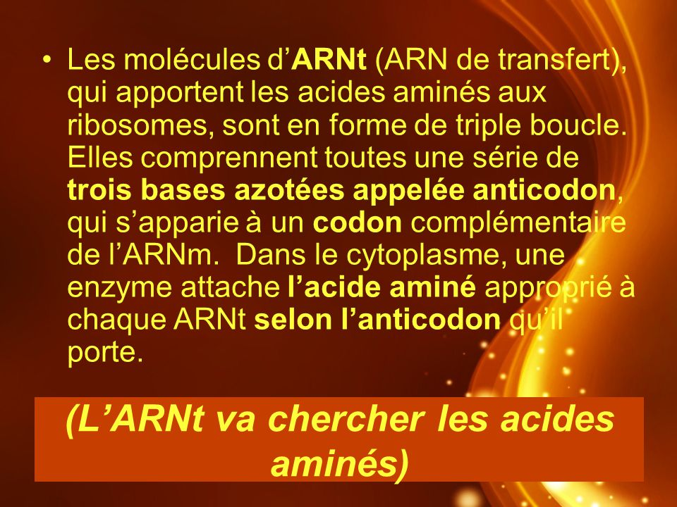 (L'ARNt va chercher les acides aminés)