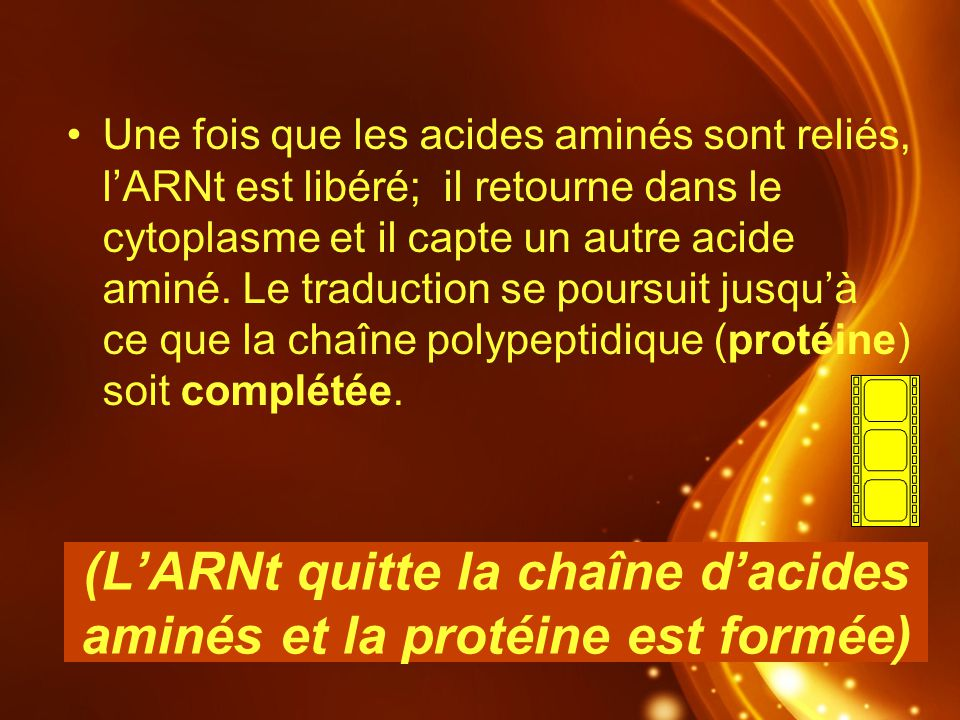 (L'ARNt quitte la chaîne d'acides aminés et la protéine est formée)
