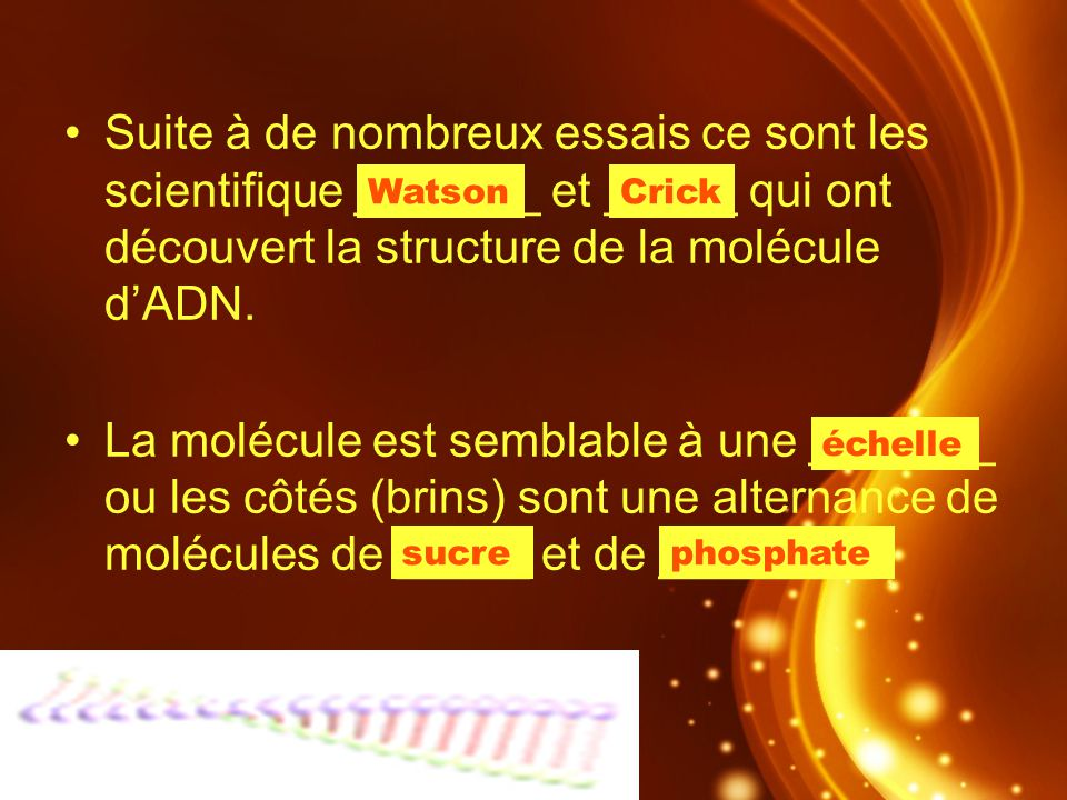 Suite à de nombreux essais ce sont les scientifique _______ et _____ qui ont découvert la structure de la molécule d'ADN.