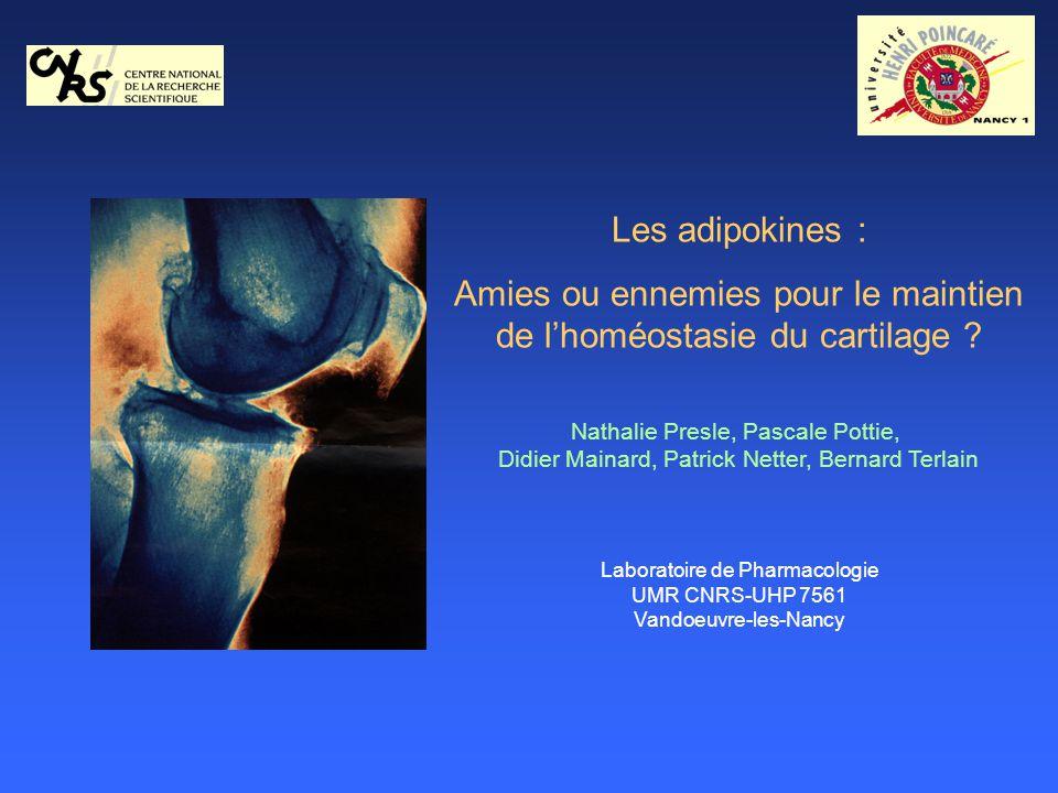 Amies ou ennemies pour le maintien de l'homéostasie du cartilage