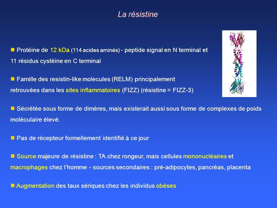 La résistine Protéine de 12 kDa (114 acides aminés) - peptide signal en N terminal et. 11 résidus cystéine en C terminal.