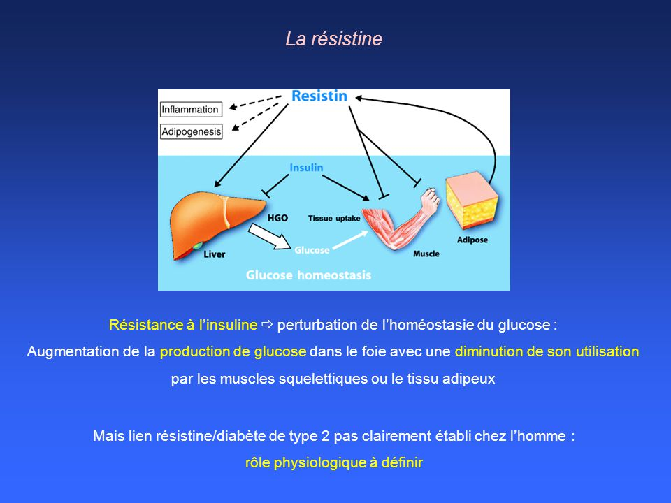 Résistance à l'insuline  perturbation de l'homéostasie du glucose :